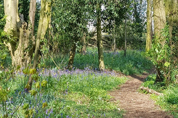 Bluebell Woods at Catthorpe Manor
